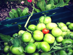 tomato-chutney-pic